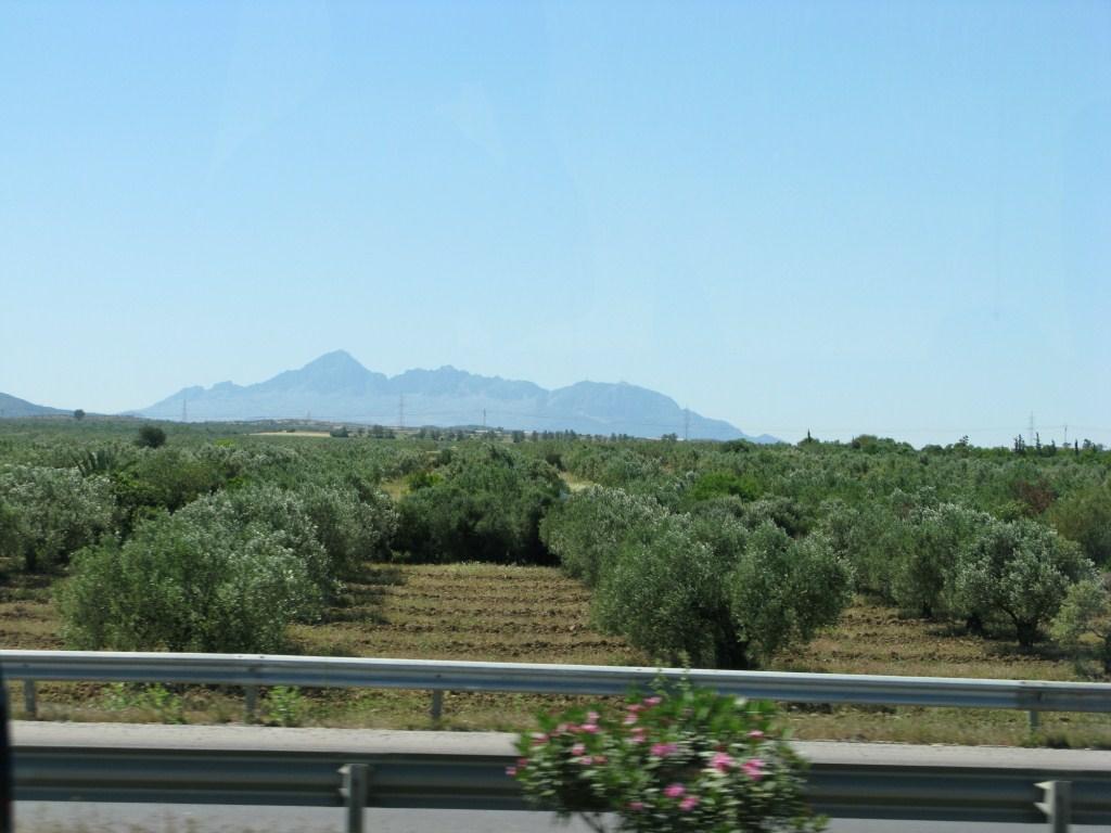 Оливковые рощи в Тунисе